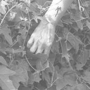 Hands 6 16(LR)